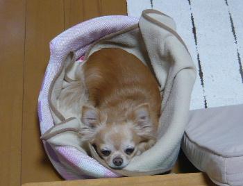 blog2014051801.jpg