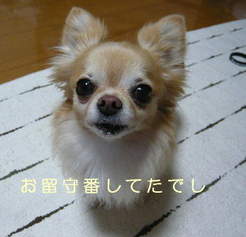 blog2014052308.jpg