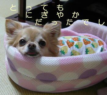 blog2014060703.jpg