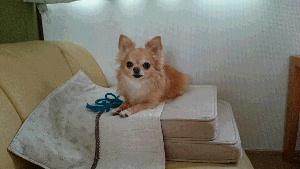 blog2014081006.jpg