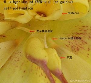 k2self1403201404.jpg