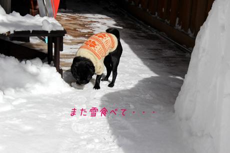 またまた雪食べて~~!