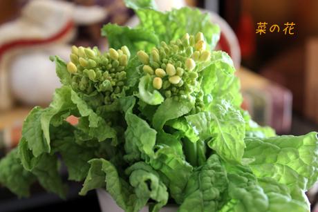 菜花。。。