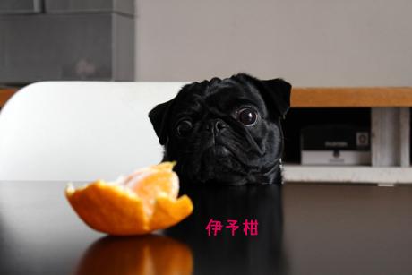 柑橘けい・・・好き