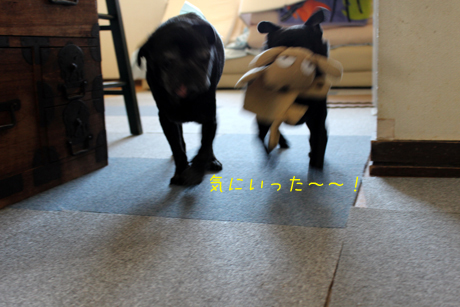 持って走る~~!