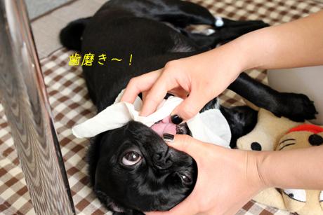 歯磨き=果りん