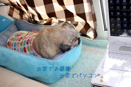 出窓でお昼寝