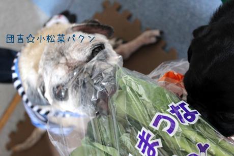 団吉小松菜パクン