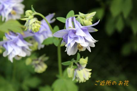 ご近所のお花1