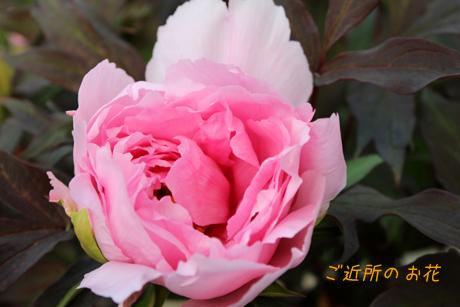 ご近所のお花2