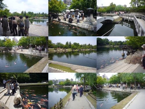 龍仙湖には鯉も!