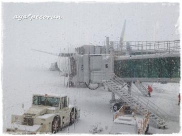 2014.3.9 函館空港到着時②