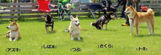 IMG_7382_AZUKI.jpg