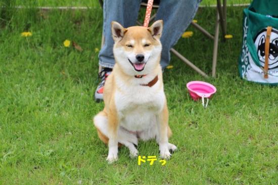 IMG_7508_AZUKI.jpg