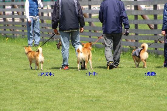 IMG_7664_AZUKI.jpg