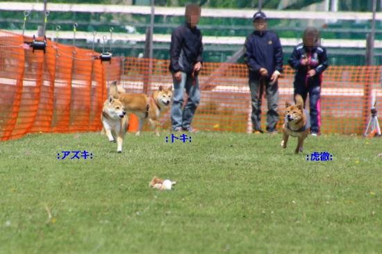 IMG_7674_AZUKI.jpg