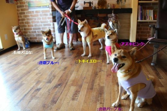 IMG_8636_AZUKI.jpg