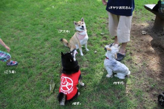 IMG_9152_AZUKI.jpg