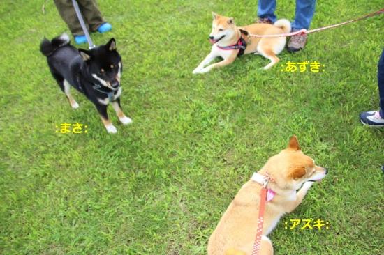 IMG_9605_AZUKI.jpg