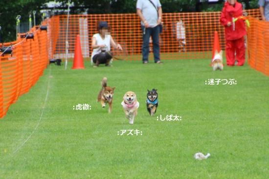 IMG_9627_AZUKI.jpg