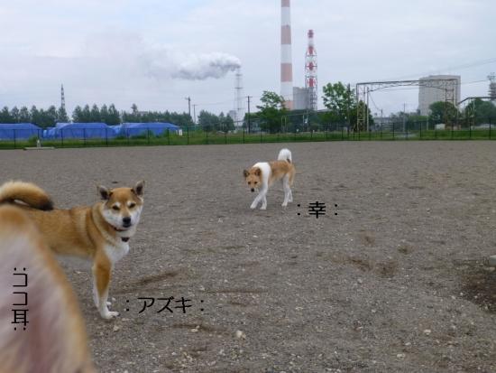 P1170209_AZUKI.jpg
