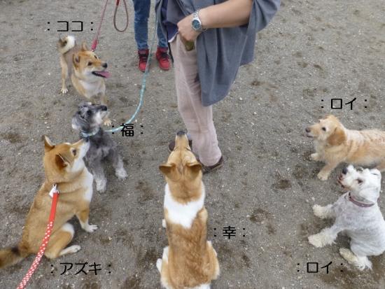 P1170230_AZUKI.jpg
