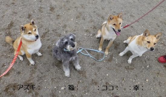 P1170238_AZUKI.jpg