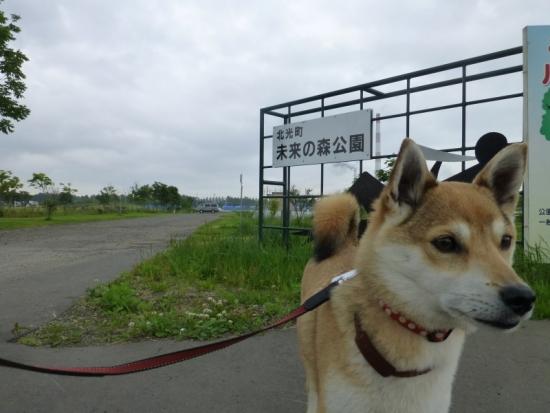 P1170249_AZUKI.jpg