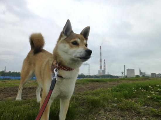 P1170252_AZUKI.jpg
