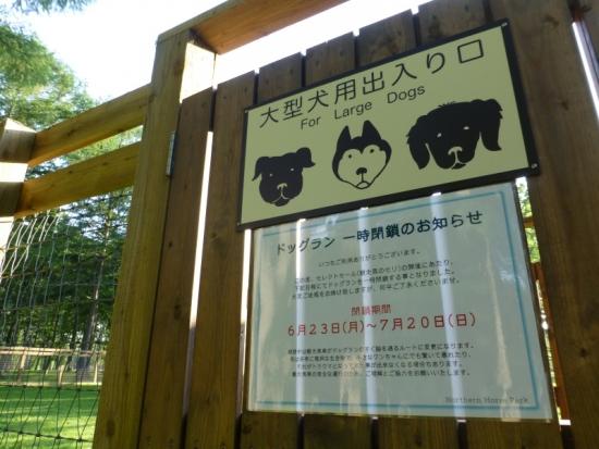 P1170414_AZUKI.jpg