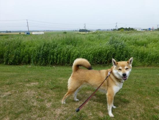 P1170529_AZUKI.jpg