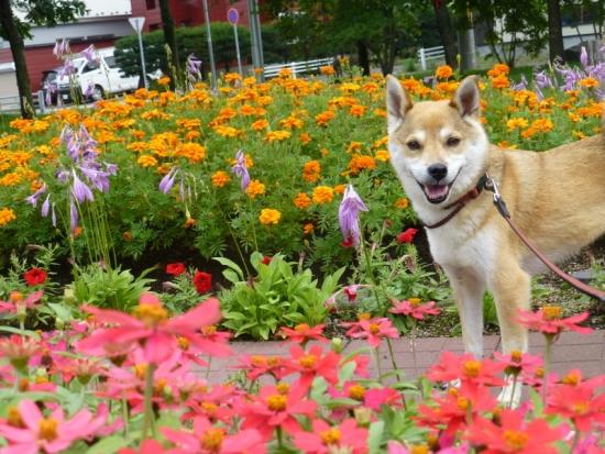 P1170871_AZUKI.jpg