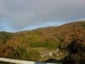 141206色づく山