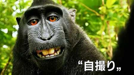 サルの自撮り NHK_20140811-235844
