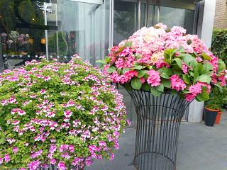 店外の花1