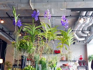 店内の花2
