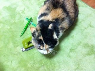 猫と文房具