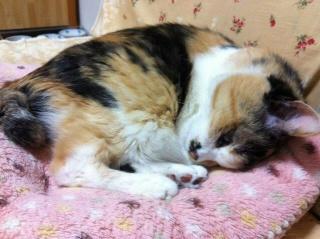 目が開いたまま寝てる猫