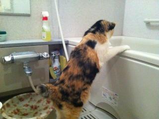 お湯加減は?