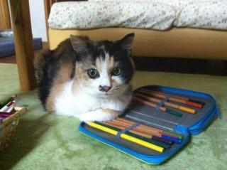 色鉛筆一人占め