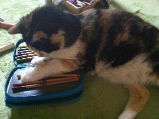 色鉛筆大好き猫