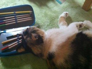 色鉛筆にすーりすーり