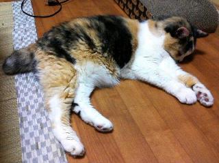 鼻をくっつけて寝る猫