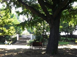 公園のベンチと少女