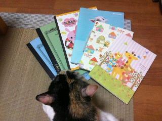 ノートと猫