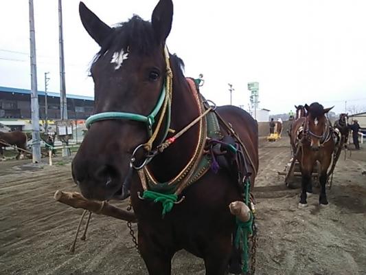 朝調教 攻め馬の順番待ちをするアズ