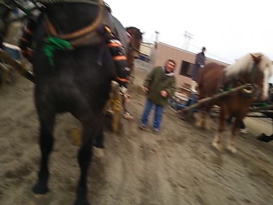 朝調教 馬の前に立つと危ないという見本