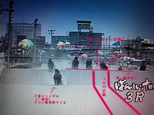 コムちゃん レース画像