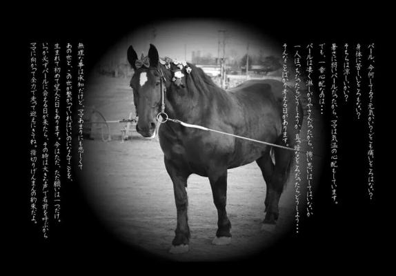 ブラックパール展 写真は厩舎のなかじまゆかさんから無断借用 ドキドキ