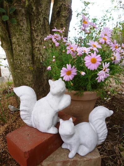 ブログ ガーデンスクイレルペア
